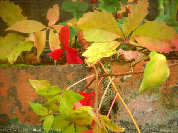Peeping Leaves