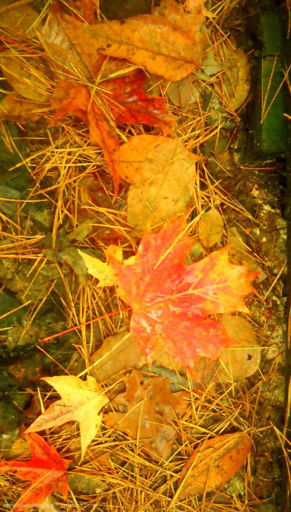 Autumn VIII