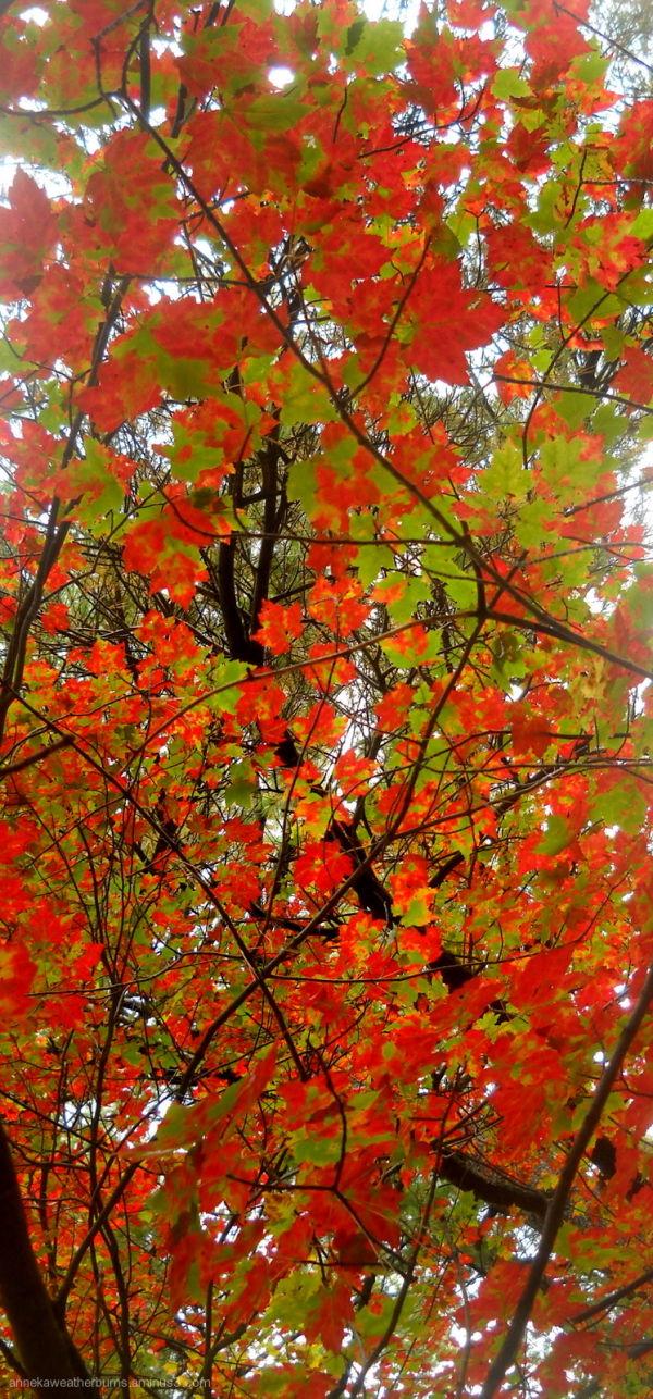 Autumn XIII
