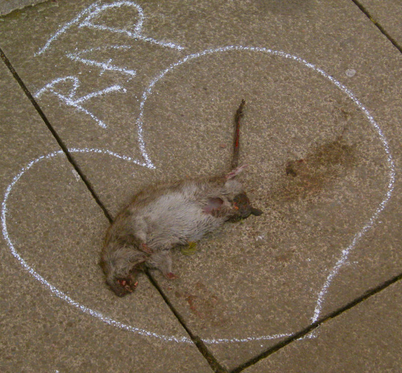 Dead rat in chalk heart outline with graffiti tag