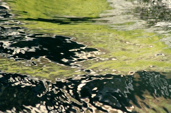 Peinture à L'Eau 12: Printemps Liquide.
