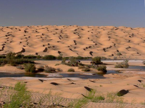 Life In Desert 2