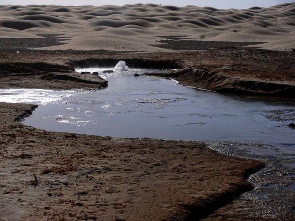Life In Desert 4