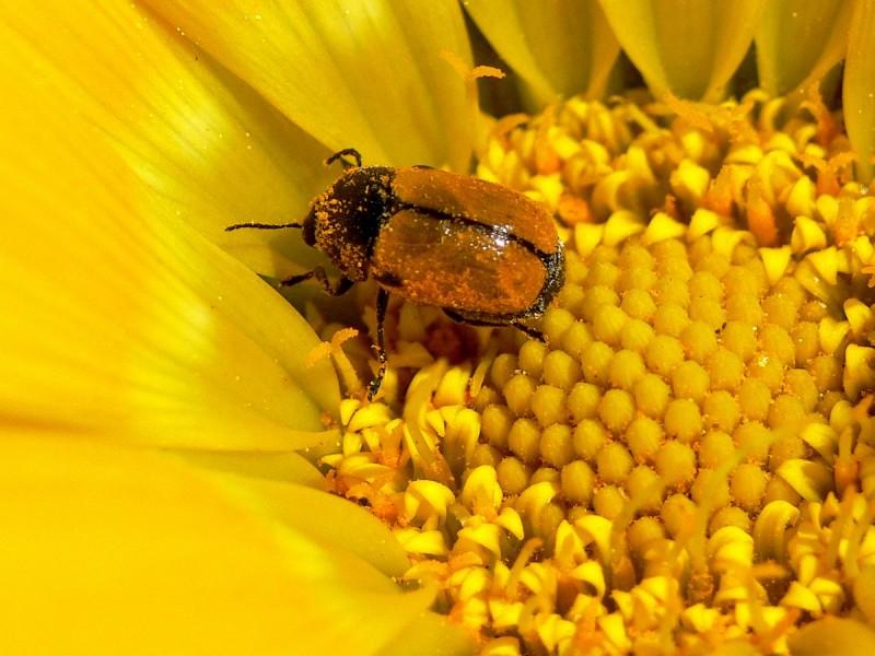 I Say Goodbye And I Say Yellow ! Yellow , Hello !!