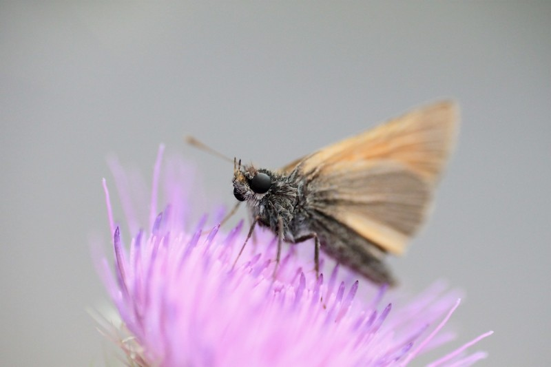 Unknown Butterfly / Papillon Inconnu ...
