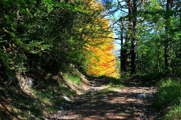 1° Flammes De L'Automne ./ 1° Autumn Flames