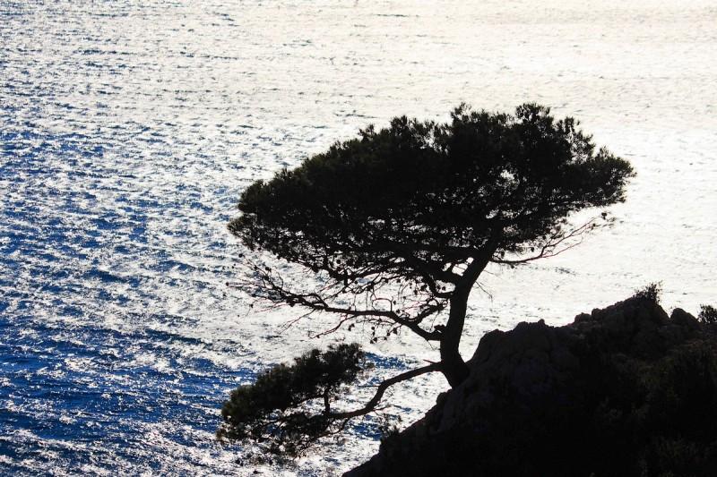Vent Et Soleil En Provence /Sun § Wind In Provence