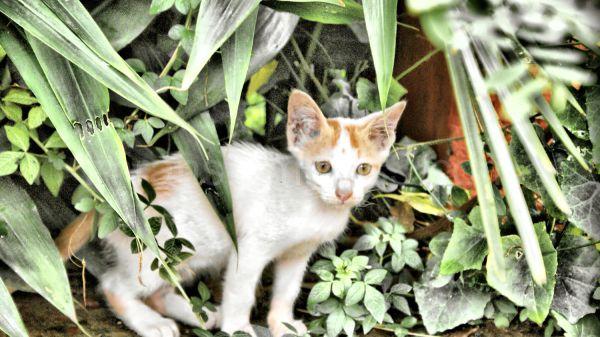 mini hiding in the bushes