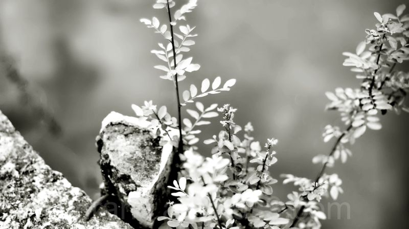 monochrome leaves