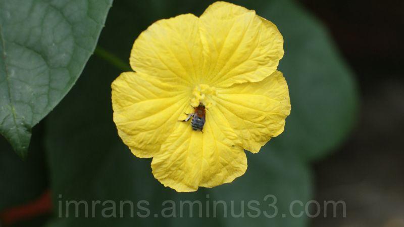 lou flower