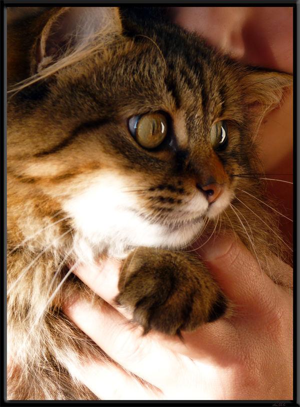 Le chat modèle
