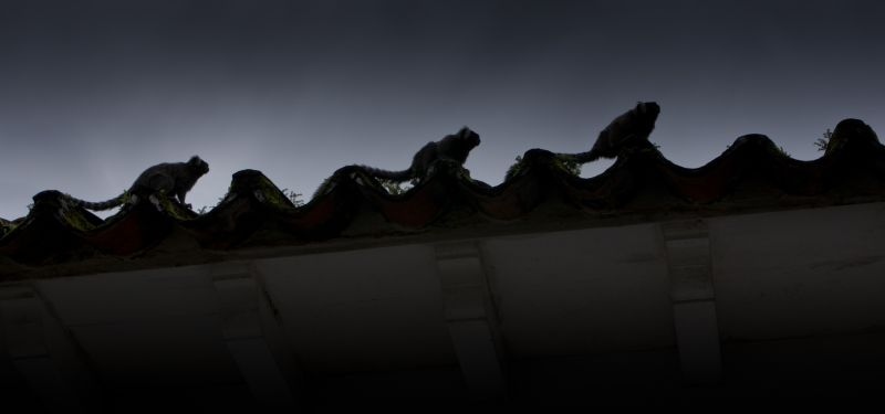Paraty Rooftops