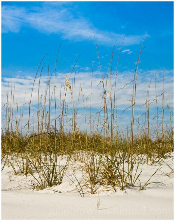 beach grass against the sky on the emerald coast