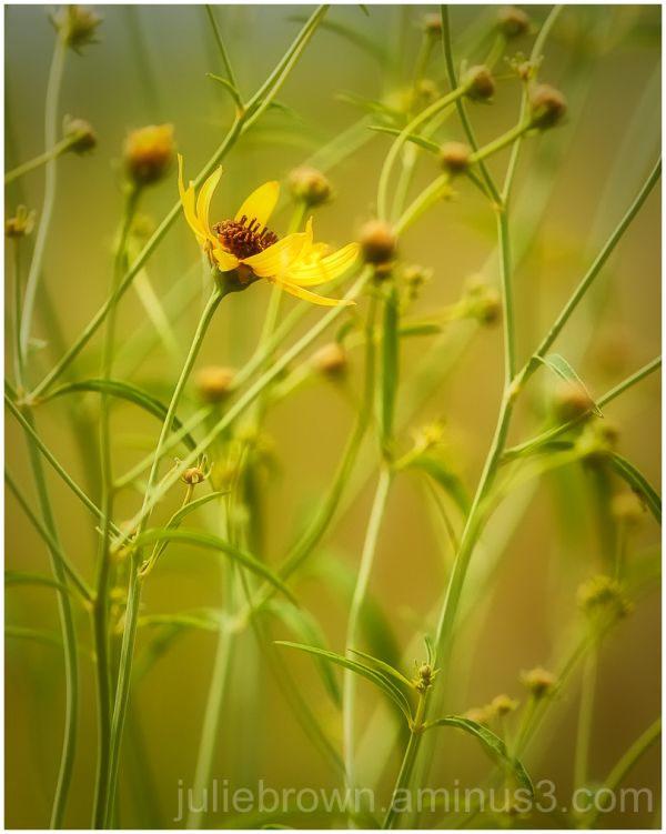 yellow flower in a crowd