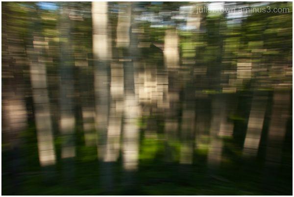 aspen pan blur kebler pass road crested butte