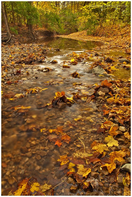 creek fall color at Fort Harrison State Park