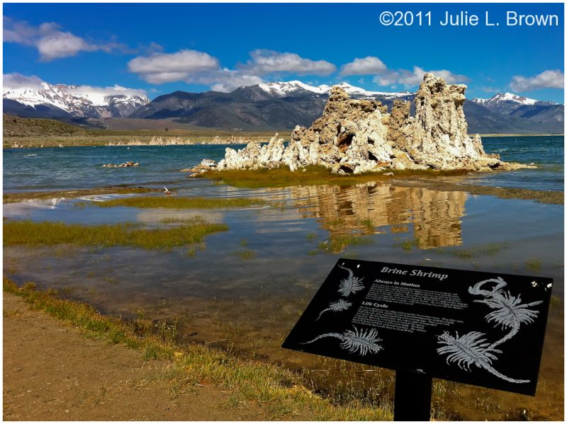 mono lake shoreline at south tufa california