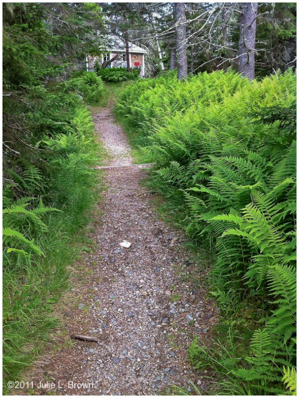 ferns and cabin on hogh island audubon camp