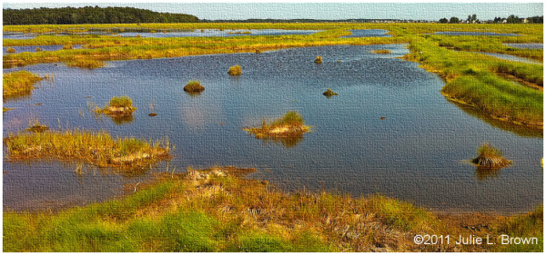 Scarborough Marsh, Scarborough Maine