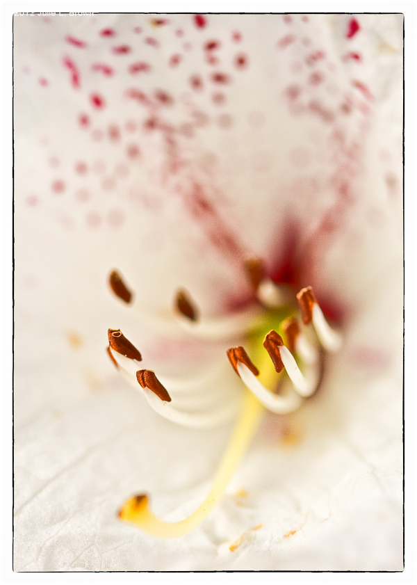 flower-stamen-anther olympic peninsula washington