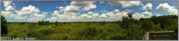 landscape panorama of corkscrew swamp sanctuary