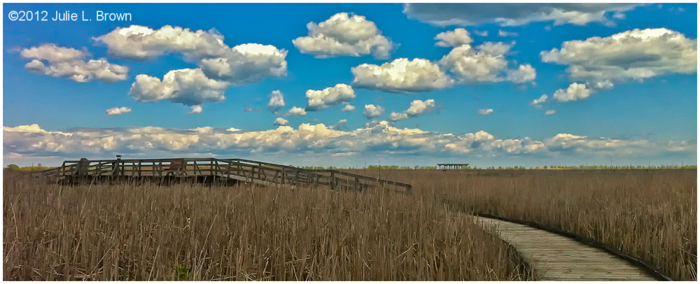 marsh boardwalk point pelee national park ontario