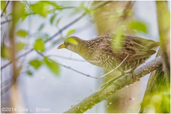 sora eagle creek park indianapolis