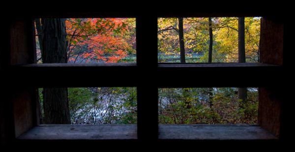 window on the world (1)