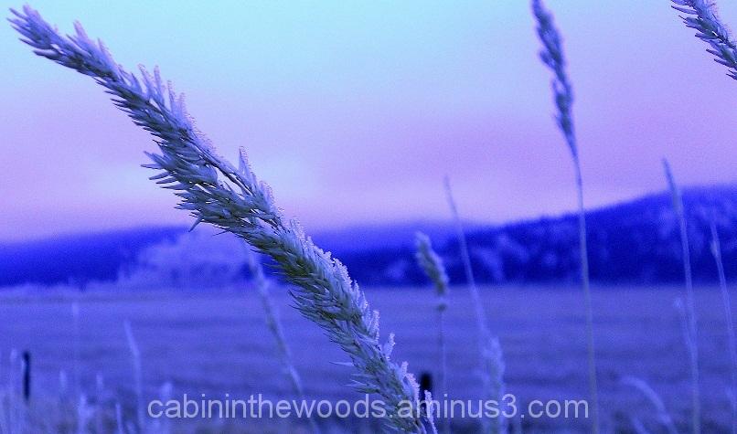 Frosty Grain