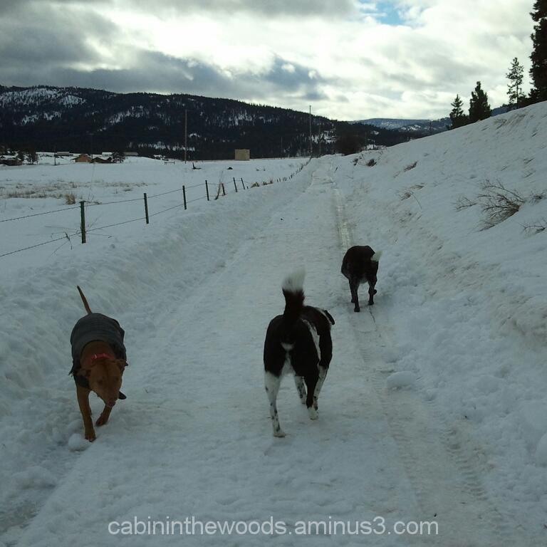 Winter Walk in Montana