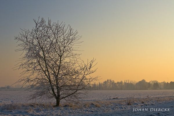 Just a lonely tree be