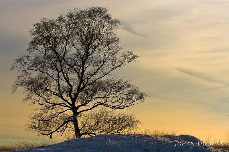 Winter op de Kalmthoutse heide