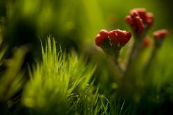 Lichen structure #3