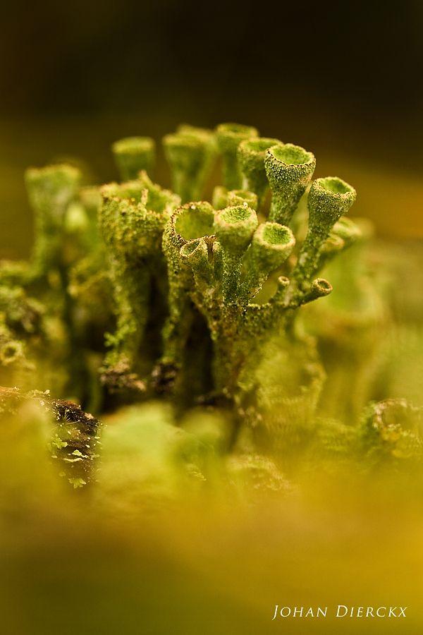 Lichen structure #6