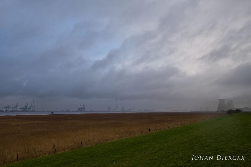 Scheldt tidal marsh