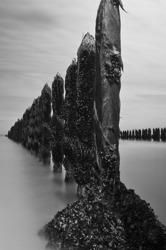 Cap Gris-Nez: Blue mussel farm 5/5