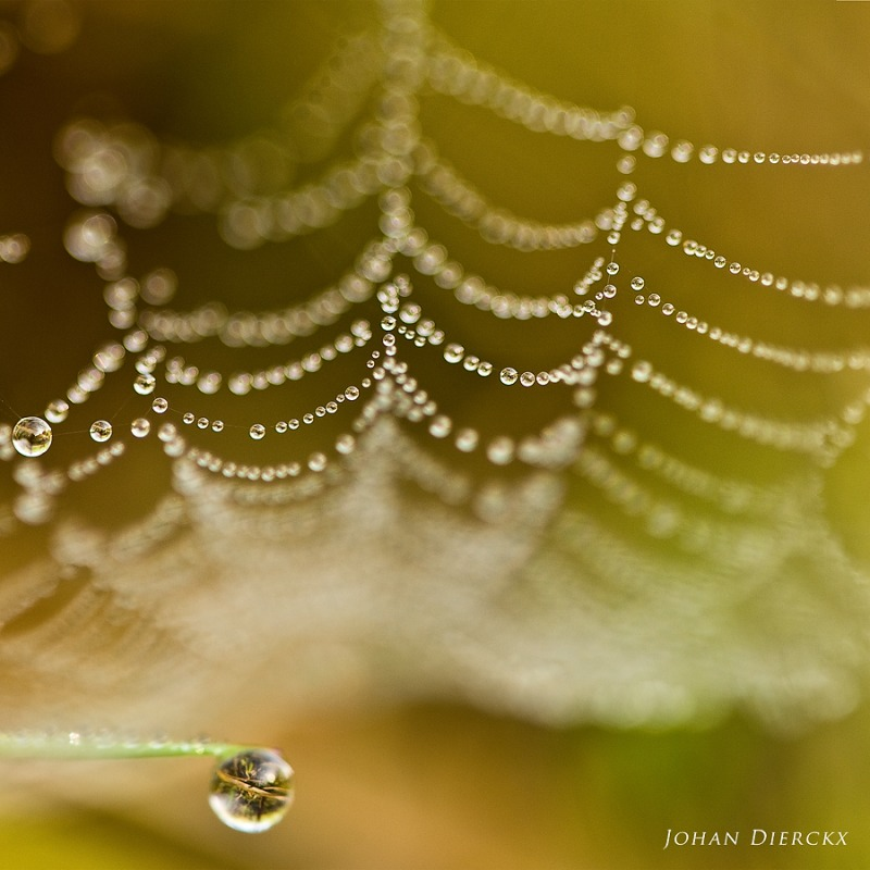 Spiderweb covered in dew