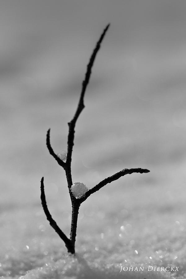 Snowscape #3