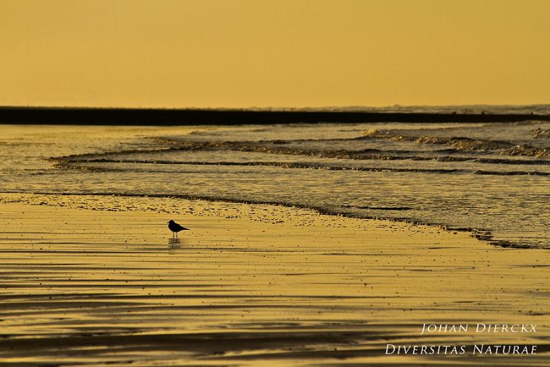 Winter at Oostende beach #5