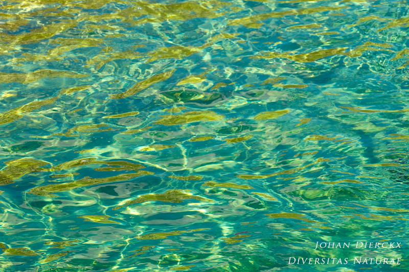 Textures and colors of water #9