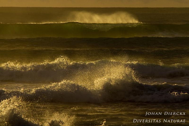 Porto Ferro - waves #2