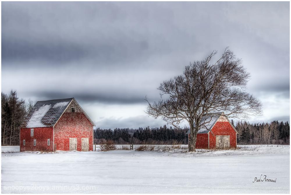 P.E.I Winter
