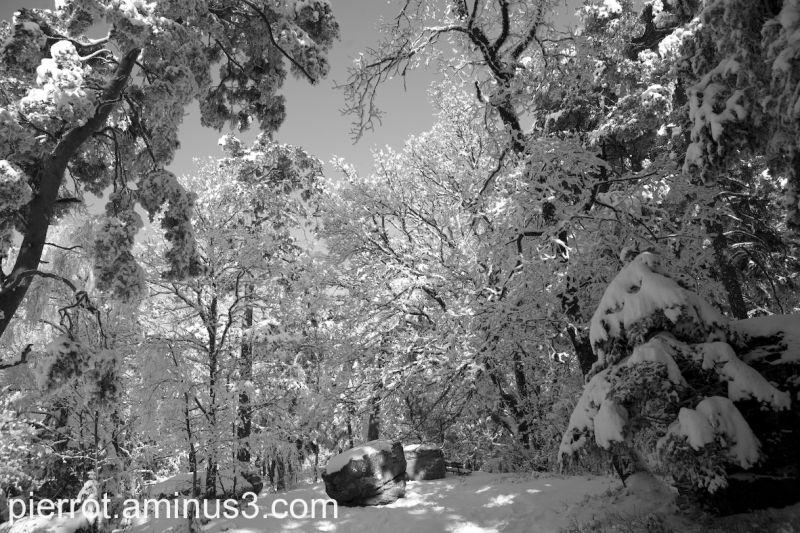 Les arbres se penchent sur ce berceau en pierres
