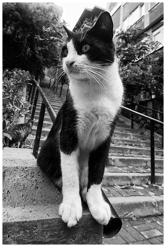 monochrome cat...
