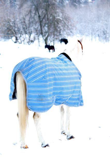 Dressed up in the winter coat - 20 C below zero!