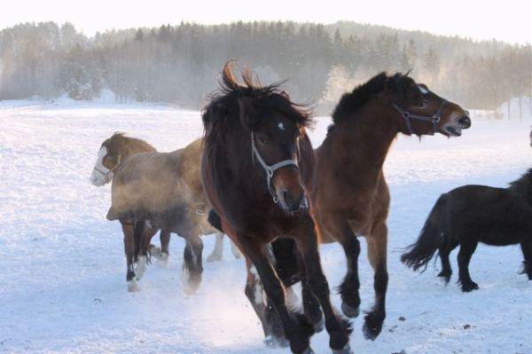 Horse Power!