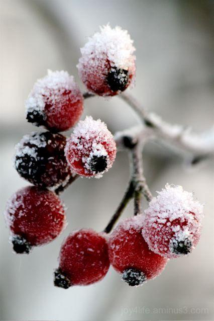 Brrrr.....berrrries!