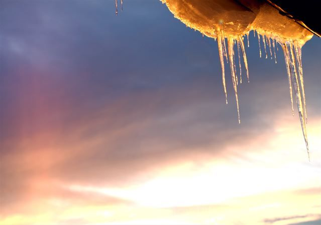 Golden Icicles