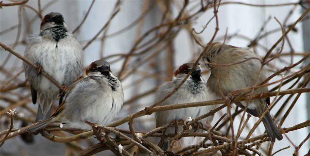 Hold On....Spring Coming Soon, Birdies!