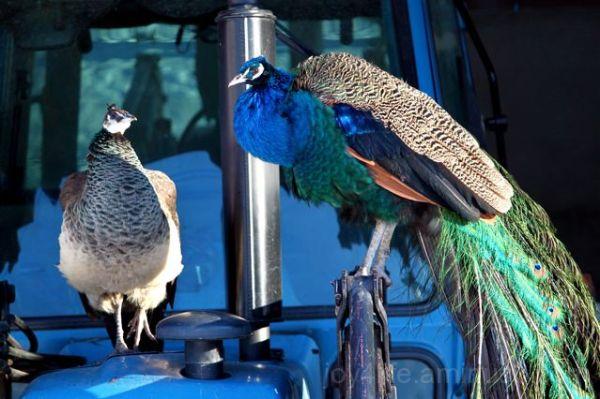 Two Beautiful Birdies